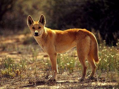 Запчасти mitsubishi dingo (cj) 1.5i (105hp) технический